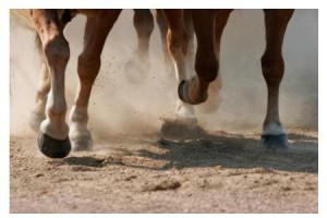 Quel sol choisir pour son cheval ? Alterner entre un sol dur et un sol mou.