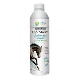 Cool Stallion