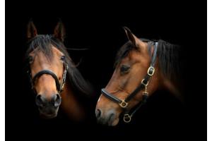 Licol & longe cheval