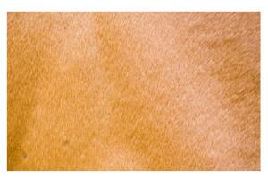 Problèmes de Peau du Cheval