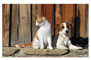 Arthrose Chien Chat