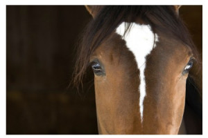 Yeux Cheval