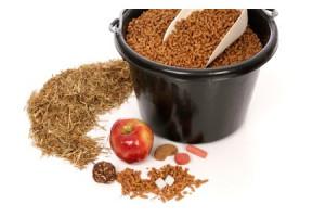 Alimentation & Friandises