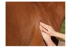 Massage Cheval