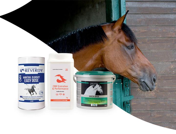 CMV : un cheval en pleine santé