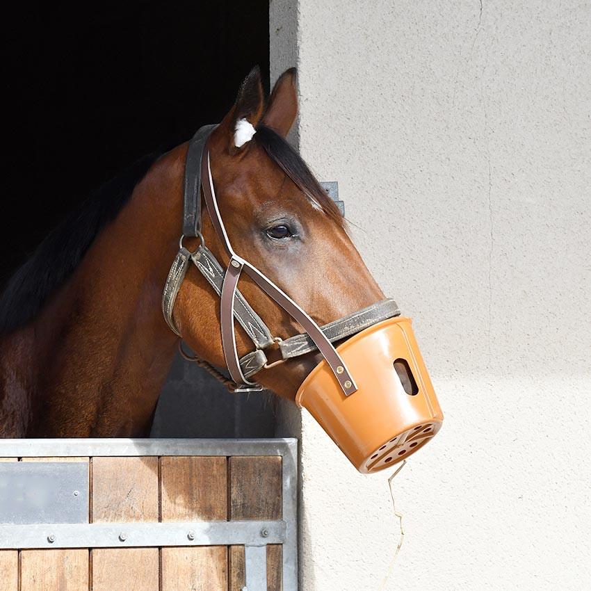 Colique du cheval : Comment reconnaître, prévenir et réagir
