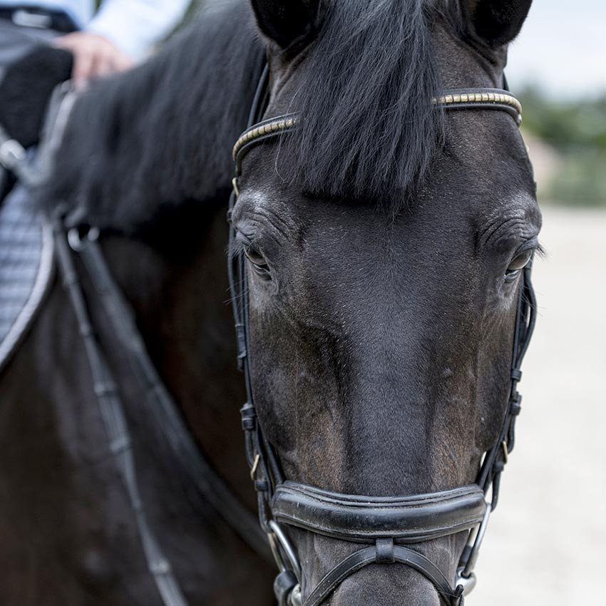 Arthrose chez le cheval : Comment prévenir et soulager