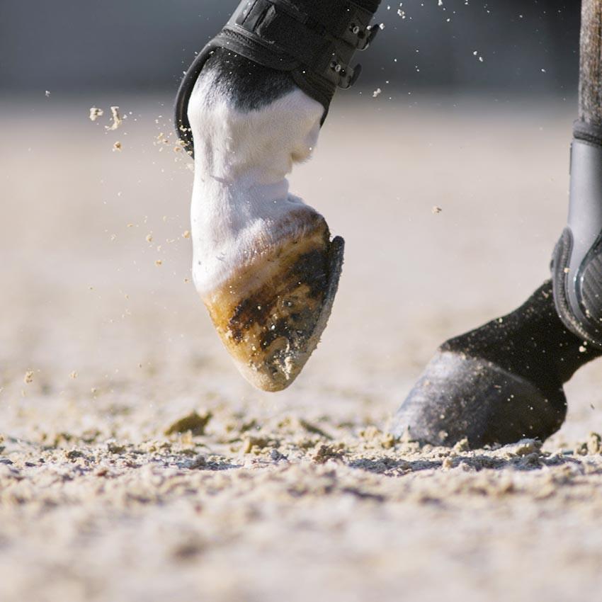 Molettes chez le cheval : Les causes et les traitements