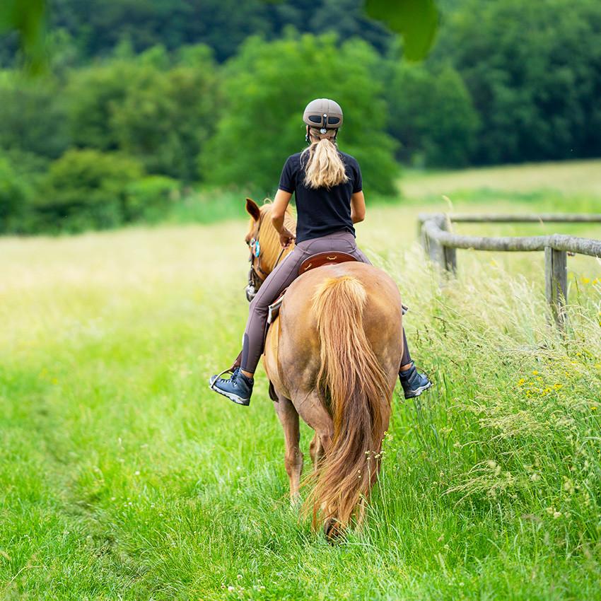 Tiques : quels risques pour vos chevaux