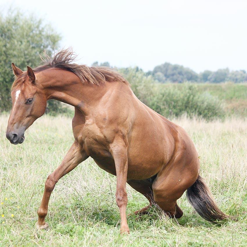 Ataxie chez le cheval : le point sur les causes