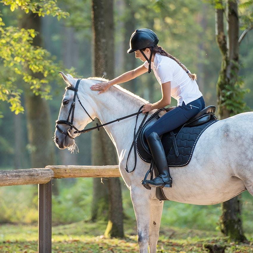Maladie de Lyme chez le cheval : causes et traitements