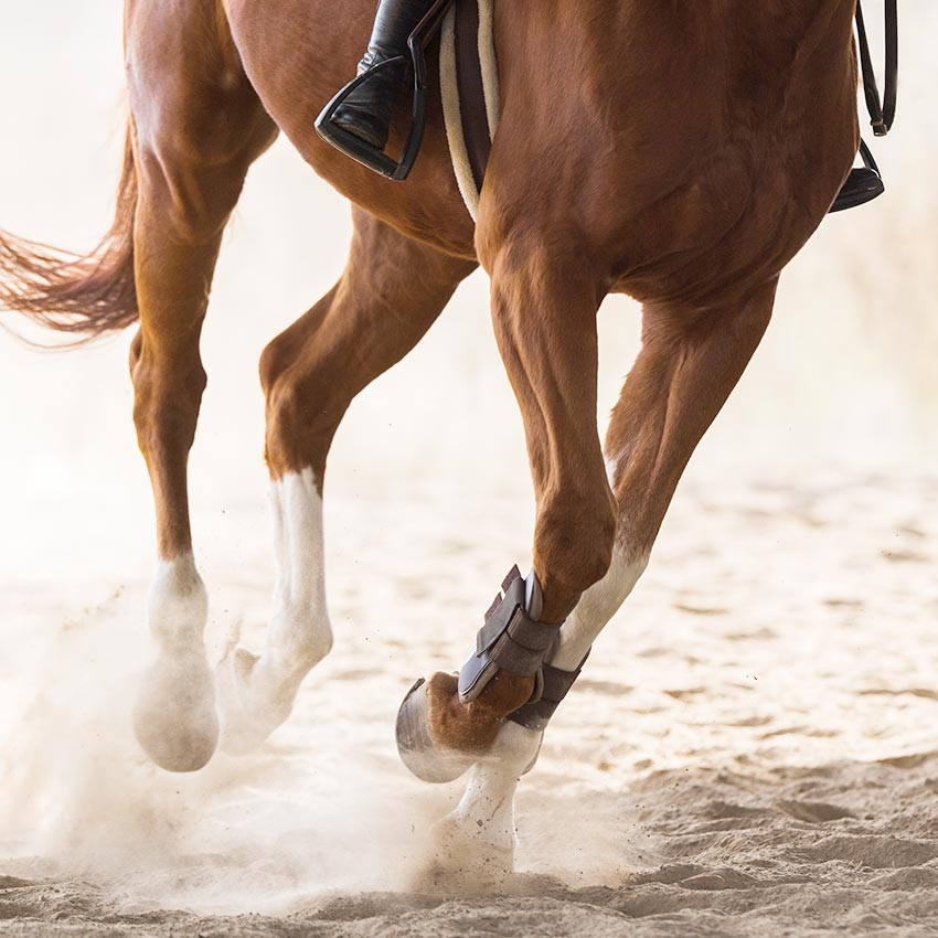 Articulation du cheval : comment bien complémenter