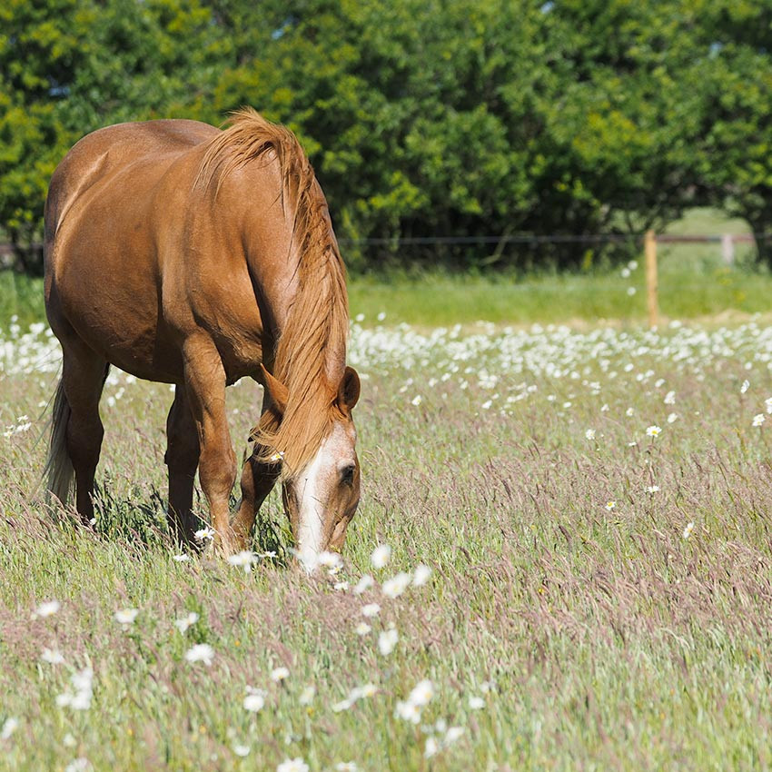Vieux cheval : comment bien s'en occuper