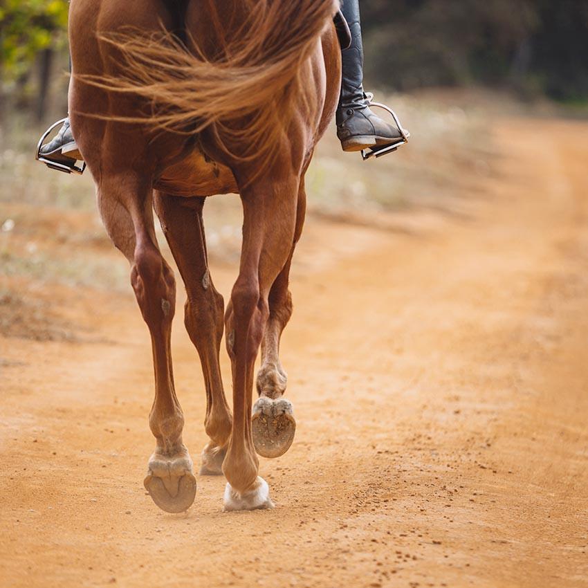 Les défauts d'aplomb du cheval : comprendre