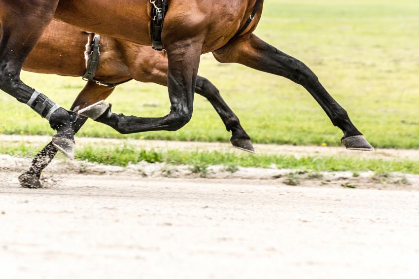 Hémorragie pulmonaire chez le cheval : Causes et traitements